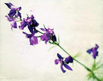 Wild Violets - Purple Wildflowers Flower Photography Print Purple and Green Spring Summer Home Decor Nature Wall Art