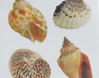 Paper House Productions Shells Stickers 8 Images Per Sheet Scrapbooking