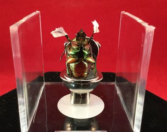 "Taxidermy Entomology Toilet ""Dung"" Beetle Anthropomorphic bathroom scene"