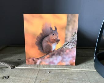 Autumn Red Squirrel Greetings Card