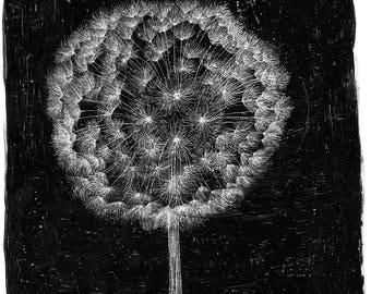 groundsel flower painting black & white scratchboard