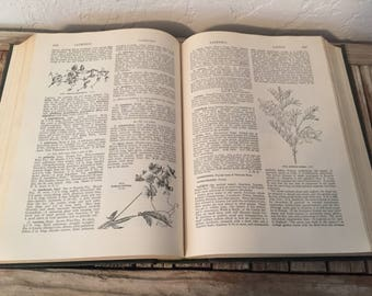 Mid Century Book Titled The Standard Cyclopedia Of Horticulture Volume II