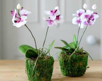Faux Pink Orchid Hand-Potted Plant | Artificial Orchid Plant | Luxury Silk  Arrangement |Faux Flowers By UK Florist