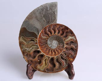 Split Ammonite Fossil Specimen Shell Healing Madagascar,Natural Home Decor+ Free Wenge Stand J511L