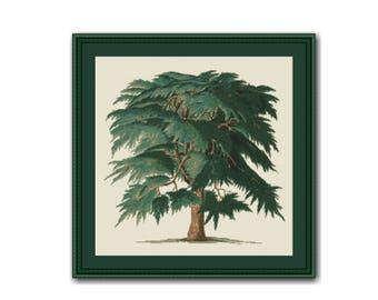 Cedar Tree Counted Cross Stitch Pattern / Chart, Instant Digital Download (AP098)