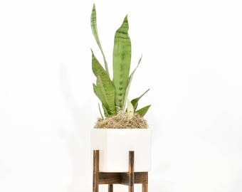 Modern Planter Stand with Pot, Mid Century Modern Planter with Stand, Ceramic Pot with Stand, Wood Planter Stand, Modern Indoor Stand
