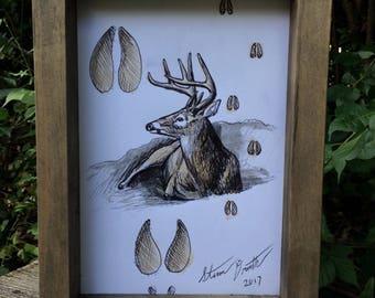 Whitetail deer drawing (framed)