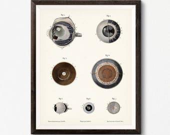 Human Eye Illustration, Digital Download, Optometrist Gift, Optometry Art, Gift for Doctor, Medical Office Wall Decor, Eye Anatomy Poster