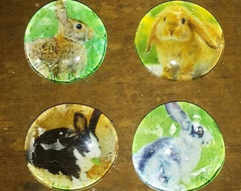 Rabbit Magnets - Bunny Magnets - Kitchen Decor