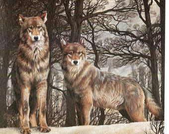 Iberian Wolf , wolf, wildlife, animal prints, bird prints, wildlife prints, animals, birds[Canis lupus]