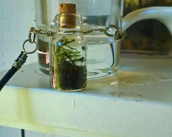 Dime-sized Terrariums/ Necklaces