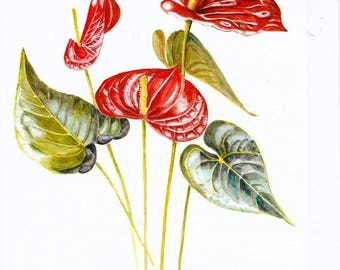 Anthurium, A4 Greetings Card