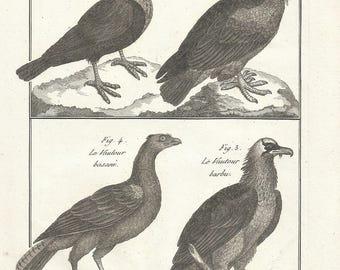 1790 Antique ORIGINAL Print, 227 Years Old Engraving, LAMMERGEIER, Ornithology