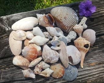 Assorted Florida Gulf Coast Seashells - per lb - Bulk Shells - For Crafting, Beach Decor, DIY