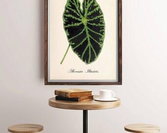 Tropical Leaf Print, Vintage Botanical Print, Antique Botanical, Leaf Print, Plant Leaf Print, Botanical Art Print, Tropical Plant Wall Art