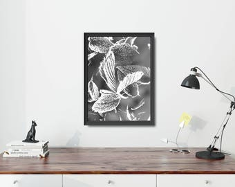 Modern Photo Poster, Black And White Photo Poster, Black And White Leaf Poster, Modern Leaf Poster, Black And White Living Room Art Print