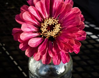 Fresh Picked Zinnia / Full Color Digital Download / Original Fine Art Flower Photograph