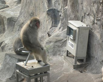 Monkey playing a video game