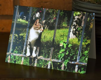 Cat in the garden - Greeting card
