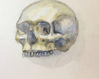 Skull watercolor sketch