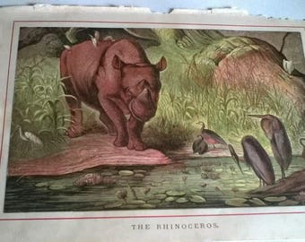 Antique Colour Book Page 'Rhinoceros'