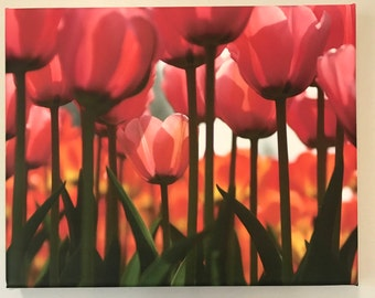 Pink Tulips on Canvas