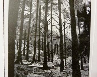 Wood Engraving 'Stokesay Wood'