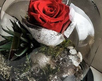 Stabilized rose in glass dome