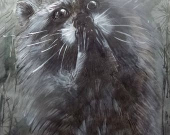Surprised racoon / Изумлённый енот