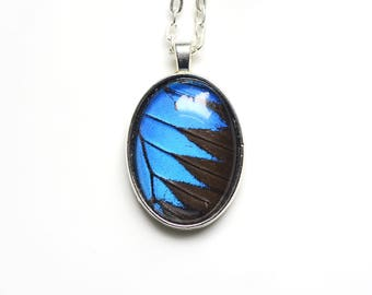 Papilio Ulysses Butterfly Necklace. REAL Butterfly Jewelry. Real Butterfly Wing Necklace. Sapphire Blue Necklace. Waterproof Butterfly Wing.