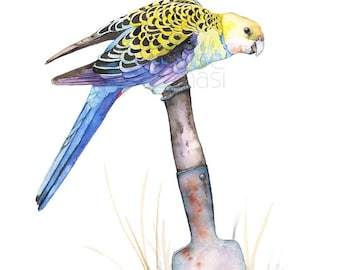 Pale Headed Rosella print, A3 size PHR21917, Australian bird art, Rosella watercolor painting print, Australian bird print