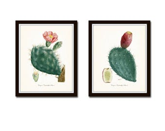 French Cactus Botanical Print Set No. 2, Giclee, Art Prints, Antique Botanical Prints, Wall Art, Prints, Cactus Prints, Desert Art, Flowers