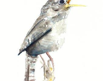 Watercolour Bird Art, Wren, Wren painting, watercolor
