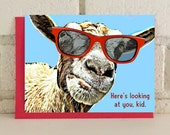 Silly Goat Birthday Card Farm Animals Greeting Card