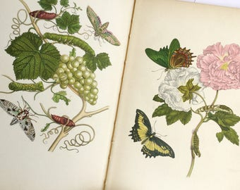 Tropical flora fauna butterfly book, Natural history, German book, Das kleine buch der tropenwunder, Lepidoptera, Insel-bucherei series