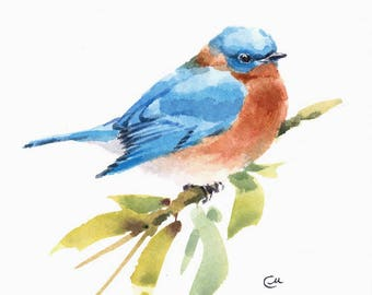 Bluebird, Original Watercolor Painting Blue Bird Illustration 7 4/5 x 7 4/5 inches