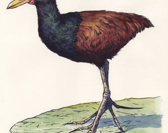 Jacana- Original Watercolor