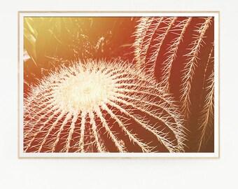Cactus Print Poster Wall Decor Tropical Retro Vintage Colour Photo Nature Minimalist Blue Sky Leaf Succulents Green Desert West Photo 1037