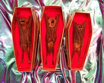 Taxidermy bats in gold coffins
