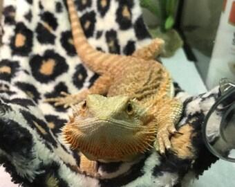 fleece hammock for bearded dragon tank machine washable reptile hammock   etsy  rh   etsy