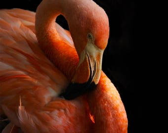 Pink Flamingo Photography Print, Tropical Wildlife and Bird Home Decor and Wall Art