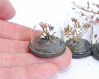 Butterflies Under Glass Dome - 1/12th dollshouse miniature entomology