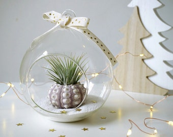 Christmas Sea Urchin Terrarium Kit | Tillandsia with Sea Urchin in Hanging Globe | Beach Wedding Ornament
