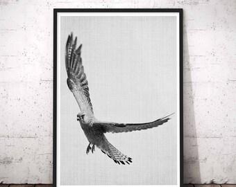 Rustic Home Decor, Black and White Bird Flying Photography, Eagle Print, Hawk Photography, Modern Minimal Bird Print, Wilderness Wall Art