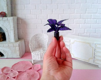 Miniature Persian shield plant. Mini potted planters for sale Best flowering for fairy garden wholesale Violet colour dollhouse Where to buy
