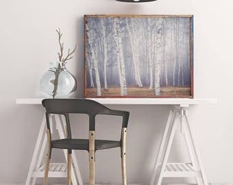 Birch Tree Art Print, Winter Art, Nature Photography Print, Tree Print, Landscape Photography, Woodland, Winter Photo