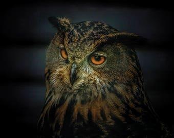 Eagle Owl - Postcard for Postcrossing