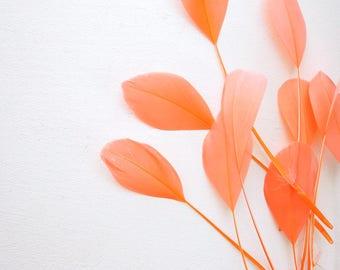 10  Orange tail coque feathers - Tangerine eyelash feathers 8-12 cm - Carrot orange coque tail feathers - Natural orange feathers