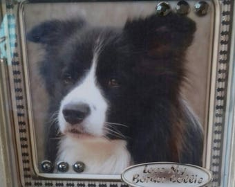 Framed picture of a border collie