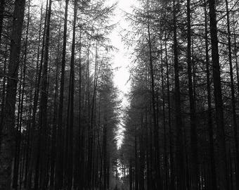 Black and White Forest Photography Print,  Tree photography print, Art Print, Countryside Nature Decor, Tall Trees